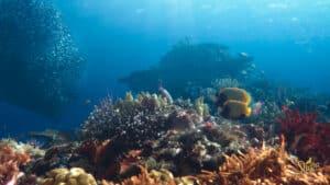 Read more about the article SHEBA®, jenama makanan haiwan Mars, Incorporated lancarkan Program Pemulihan Terumbu Karang Terbesar Di Dunia: Hope Reef